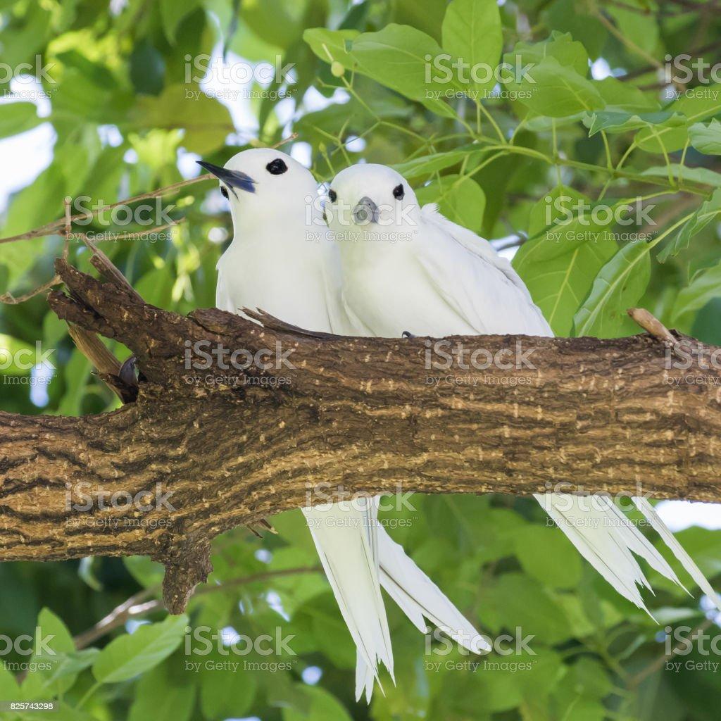 White Terns on trees stock photo