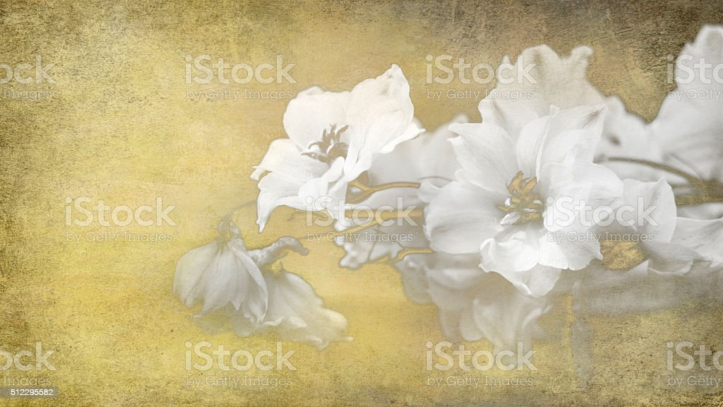 white toned flowers on paper stock photo