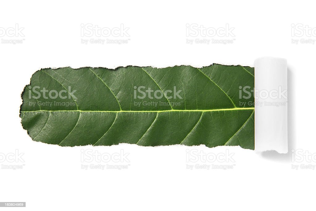 White torn paper royalty-free stock photo