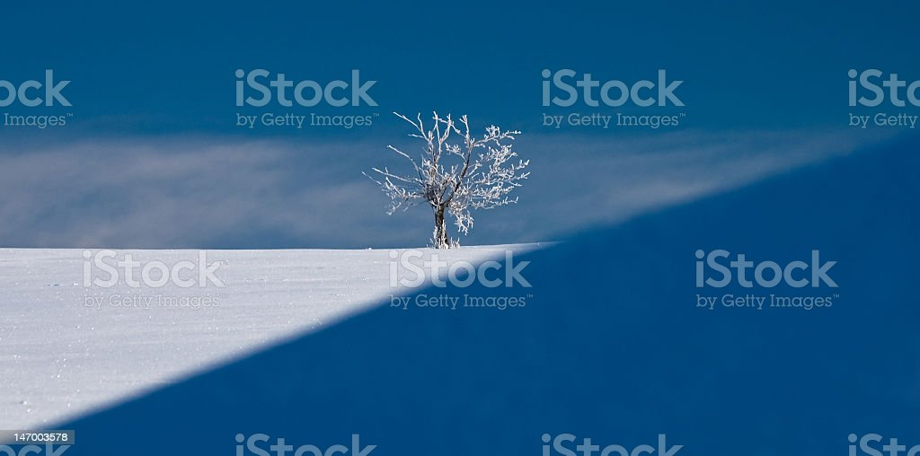 White tree in the middle of winter royalty-free stock photo