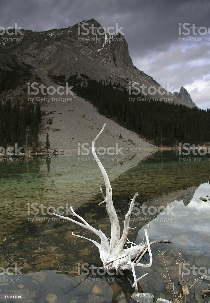 A white tree remnant in the water in Canada stock photo
