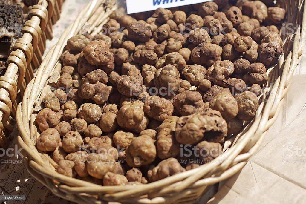 White Truffels stock photo