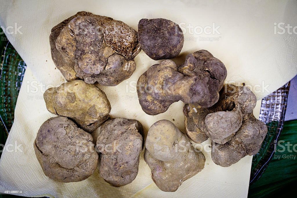 White Truffle. A Mushroom delicacy from Piedmont Italy stock photo