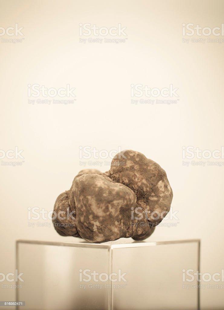 White truffle stock photo