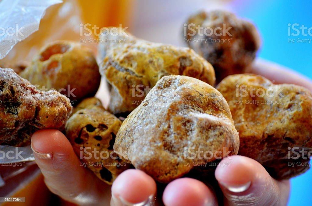 White truffle tuber (Tuber Aestivum) stock photo