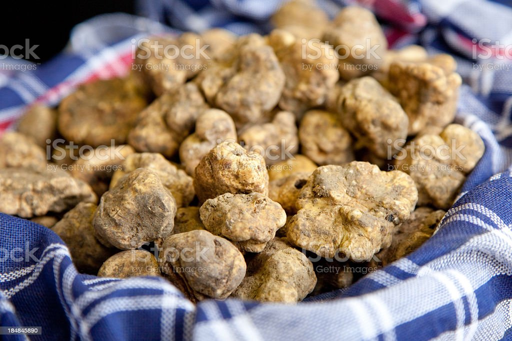 White truffles in a blue checked cloth stock photo