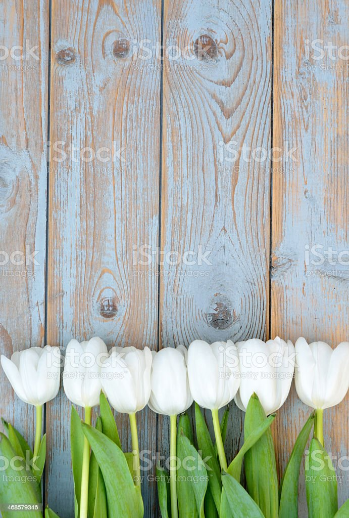 White tulips in row with empty space on old wood stock photo