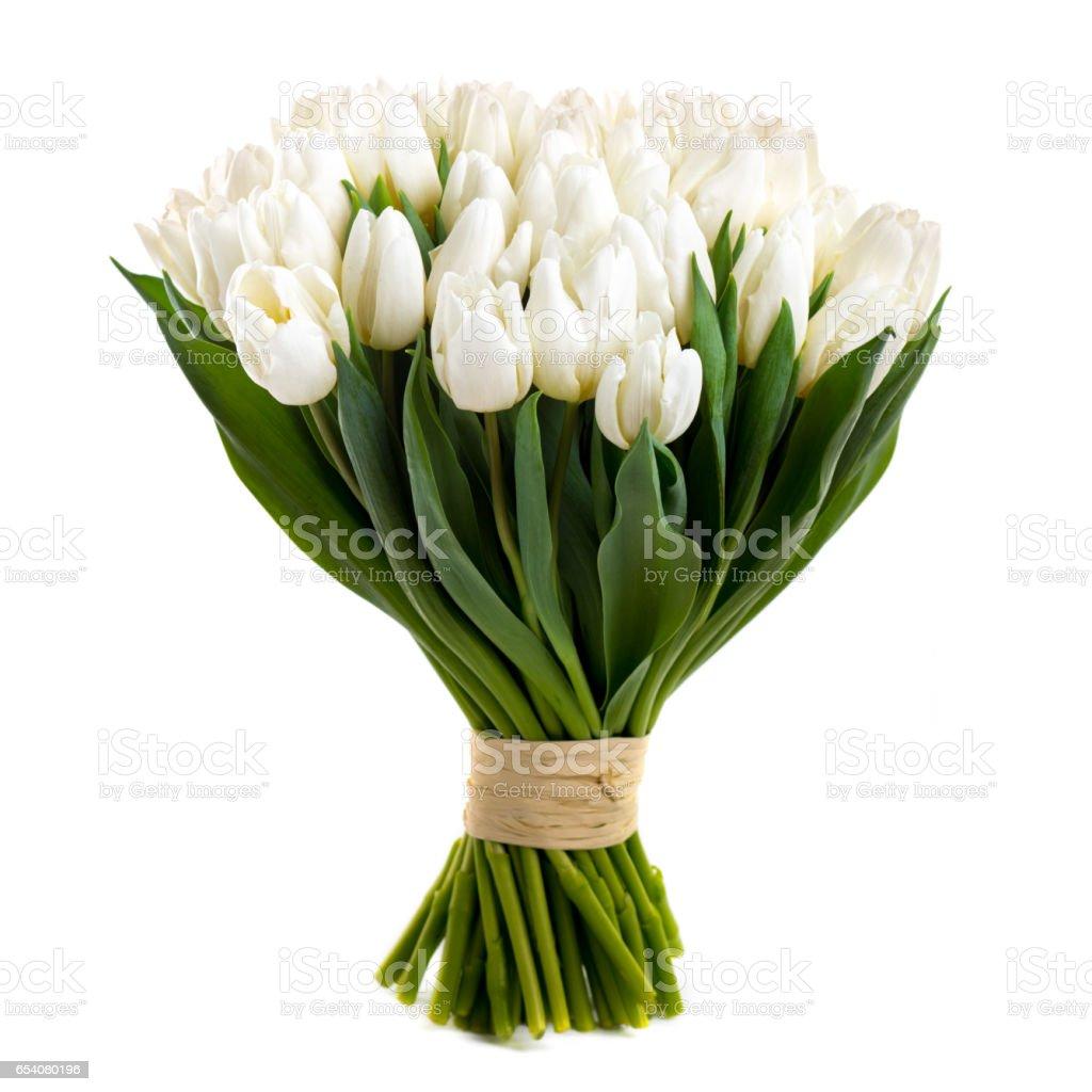white tulips isolated on white stock photo