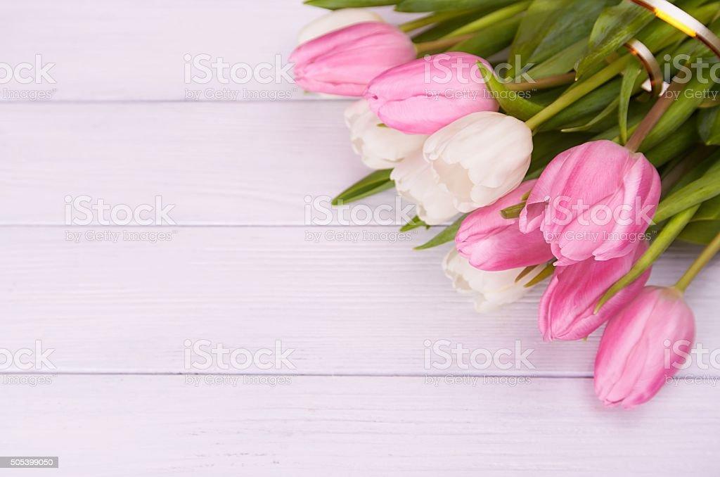 white tulips on white wooden background stock photo