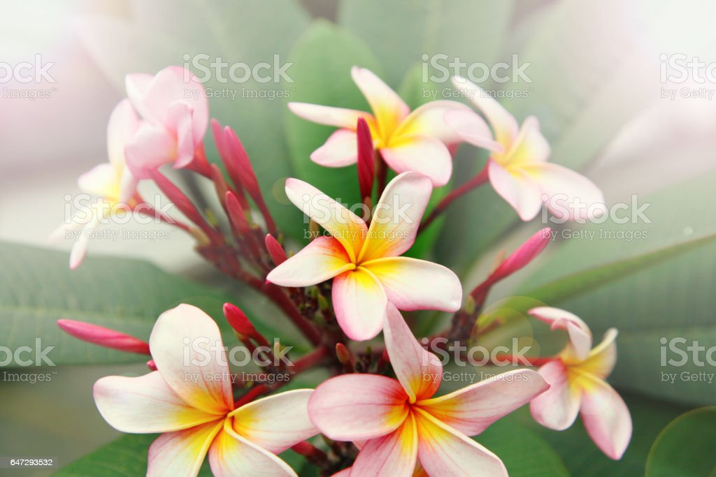 White vibrant tropical flowers stock photo