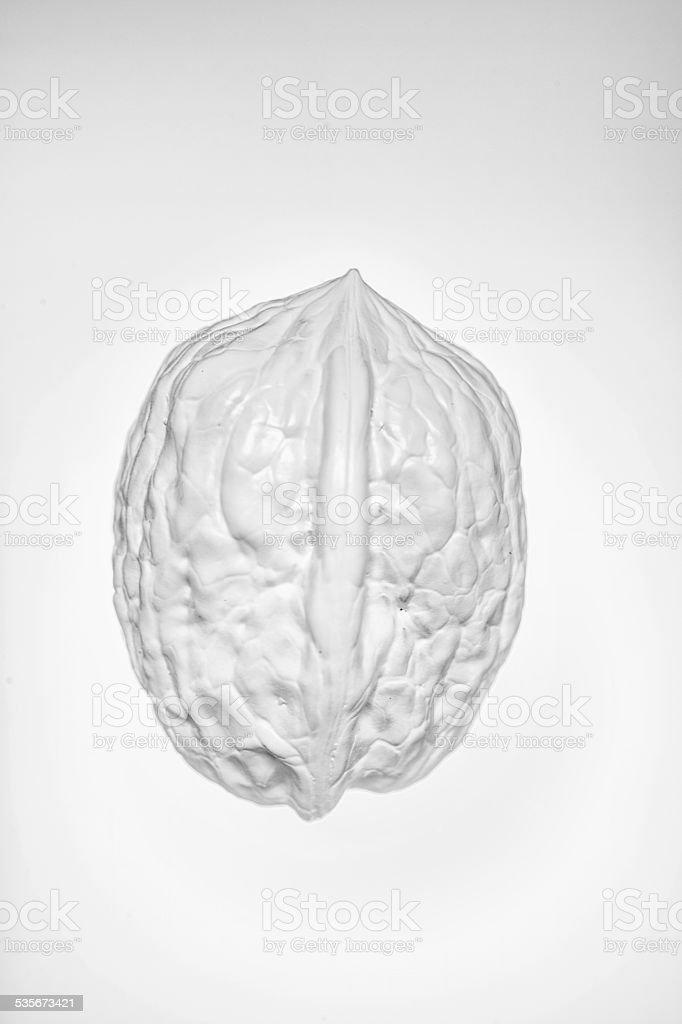 White walnut stock photo