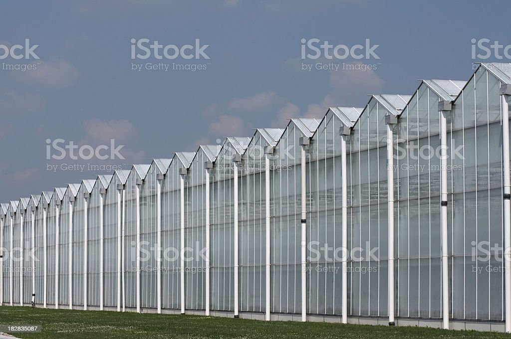 White Washed Greenhouses royalty-free stock photo