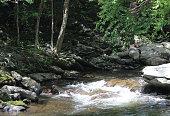White Water Caps in Smokey Mountain River