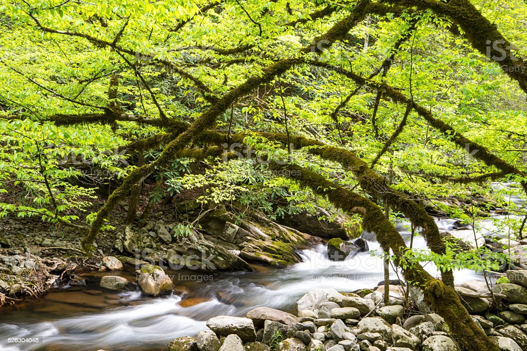 White water stream in the spring. stock photo