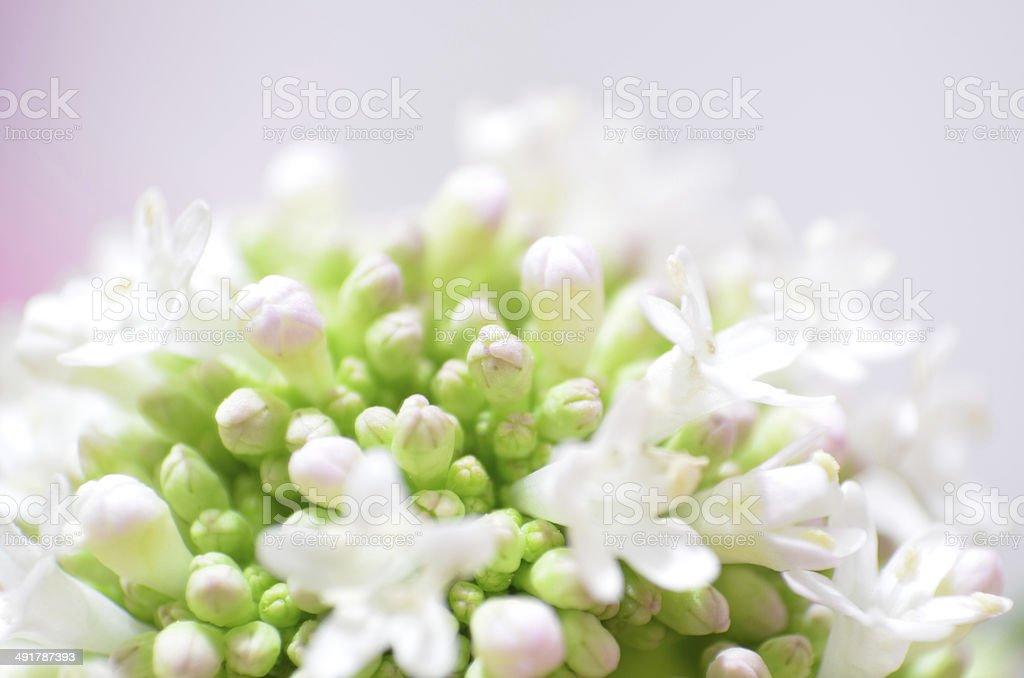 White wedding stock photo