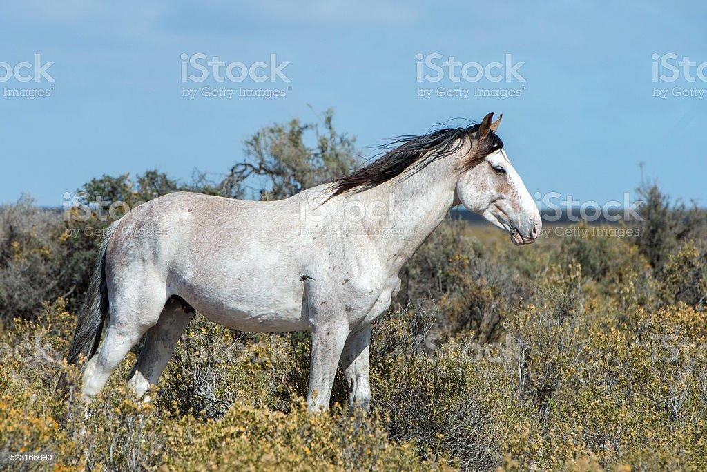 white wild horse on blue sky background stock photo