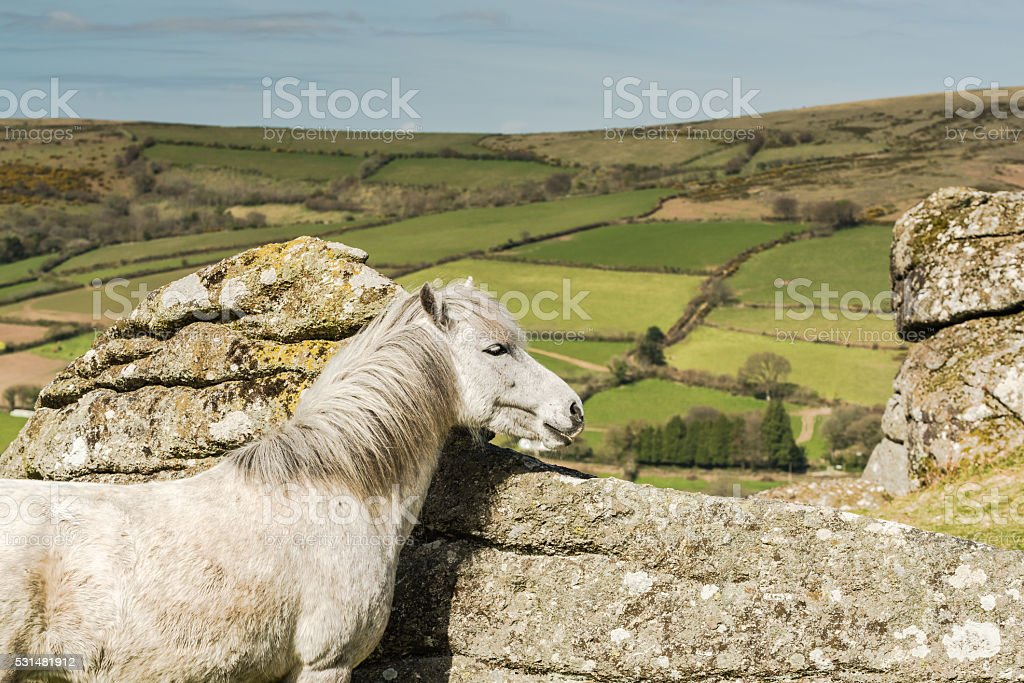 White wild horse overlooking countryside and farmlands stock photo