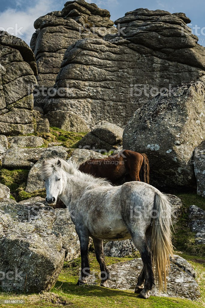 White wild pony against rocky hill stock photo