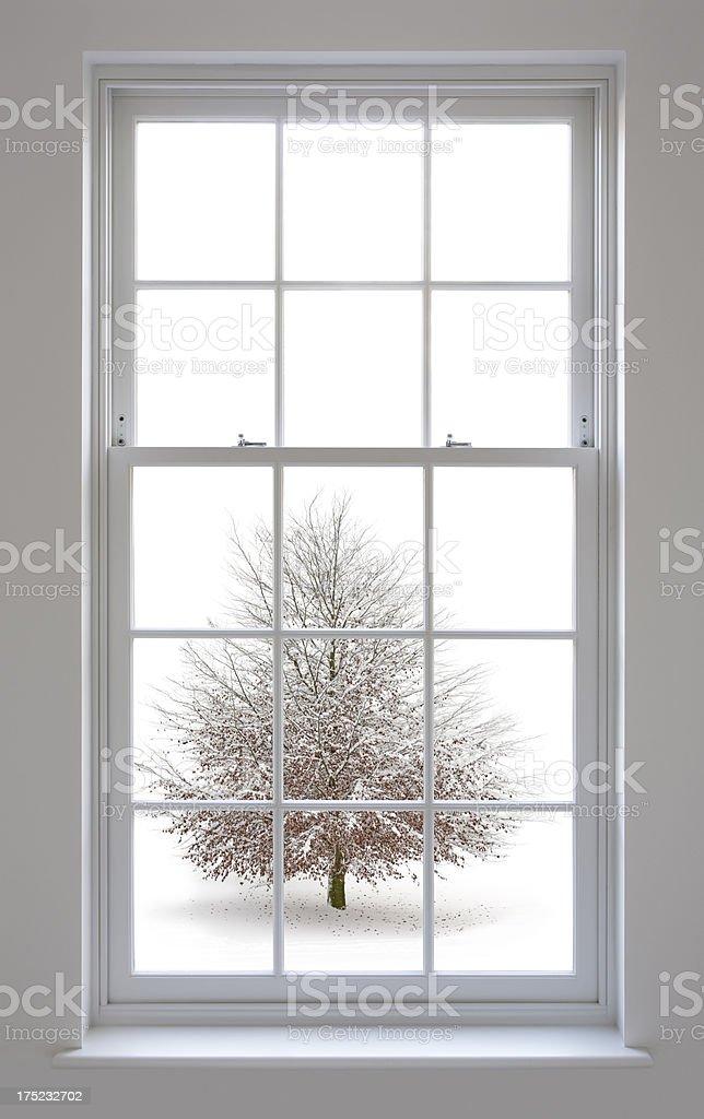 white windows and beech tree royalty-free stock photo