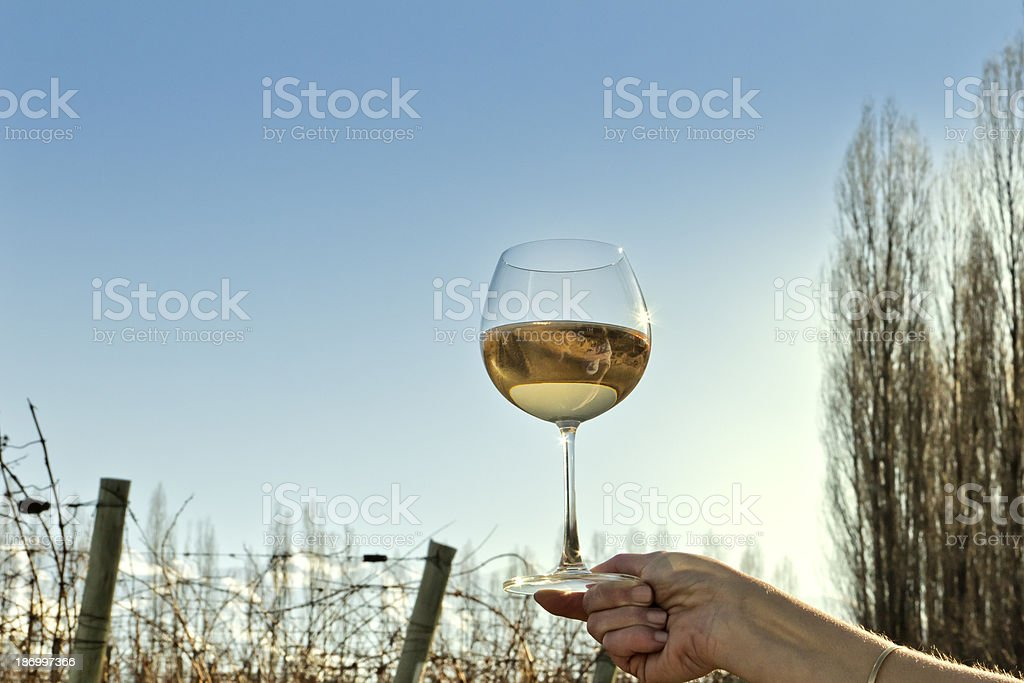 White wine and vineyard royalty-free stock photo
