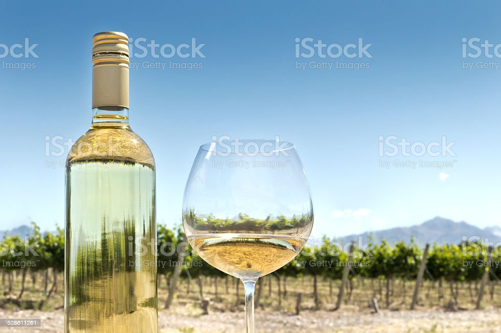 White wine and vineyard stock photo
