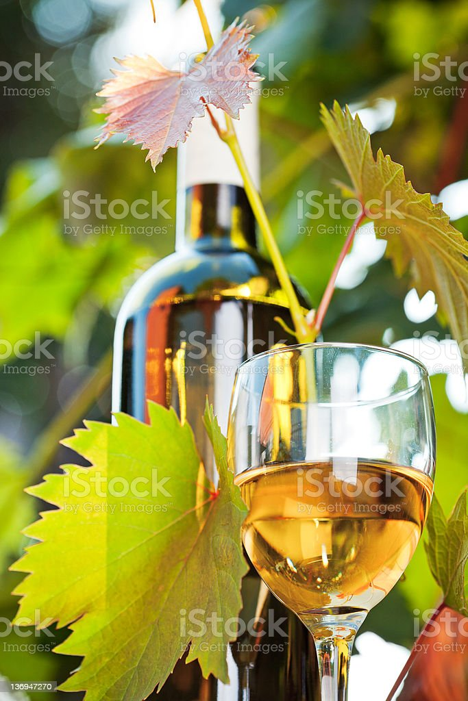 White wine bottle, young vine and glass royalty-free stock photo