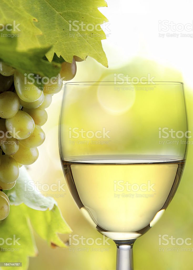 White wine glass and grapes in vineyard stock photo