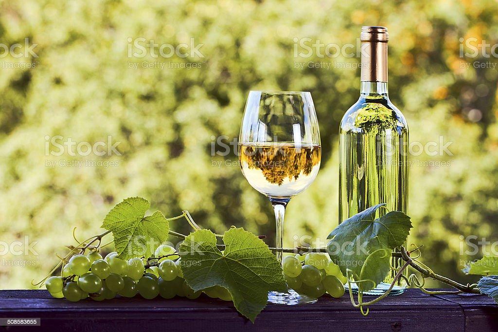 white wine in vineyard stock photo