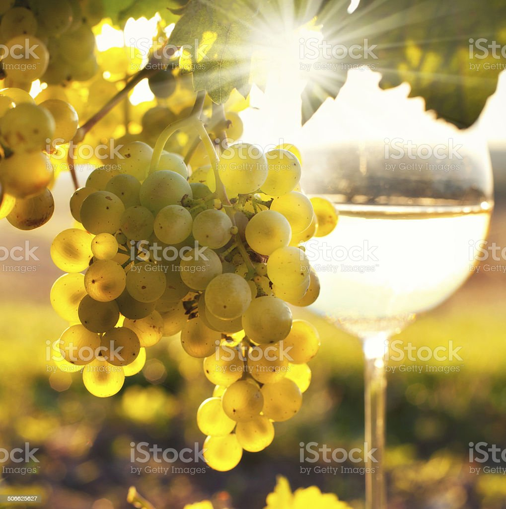 white wine with fresh grapes stock photo