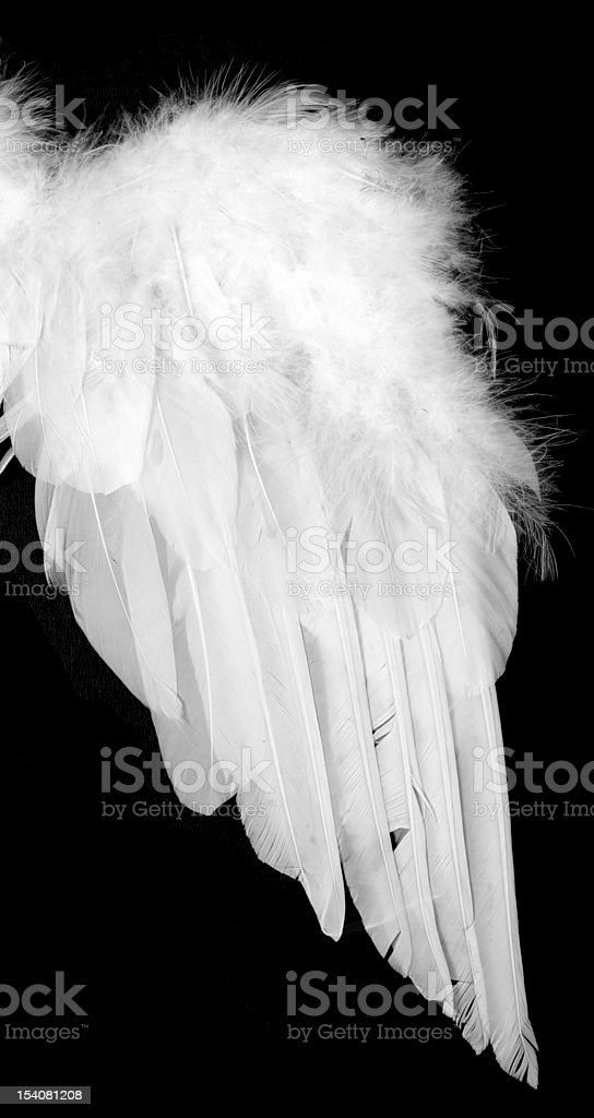 White wing royalty-free stock photo