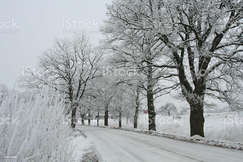 White winter royalty-free stock photo
