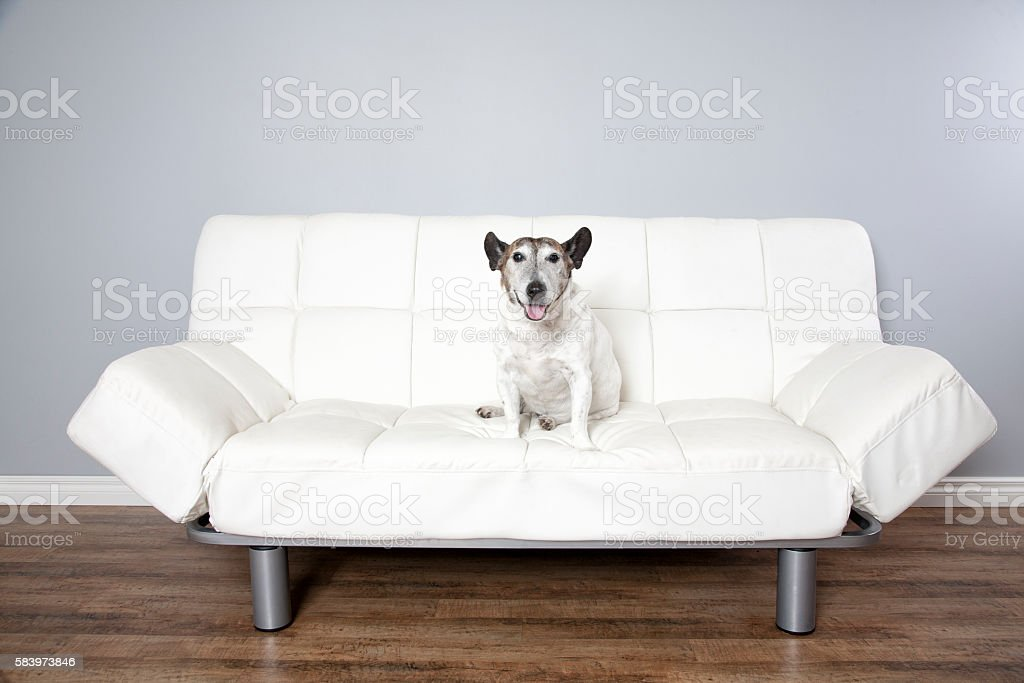 White With Dog stock photo