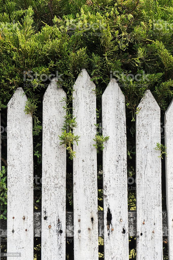 White wood wall near green tree stock photo
