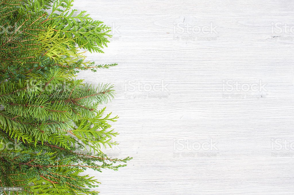 White wooden background with evergreen branches stock photo