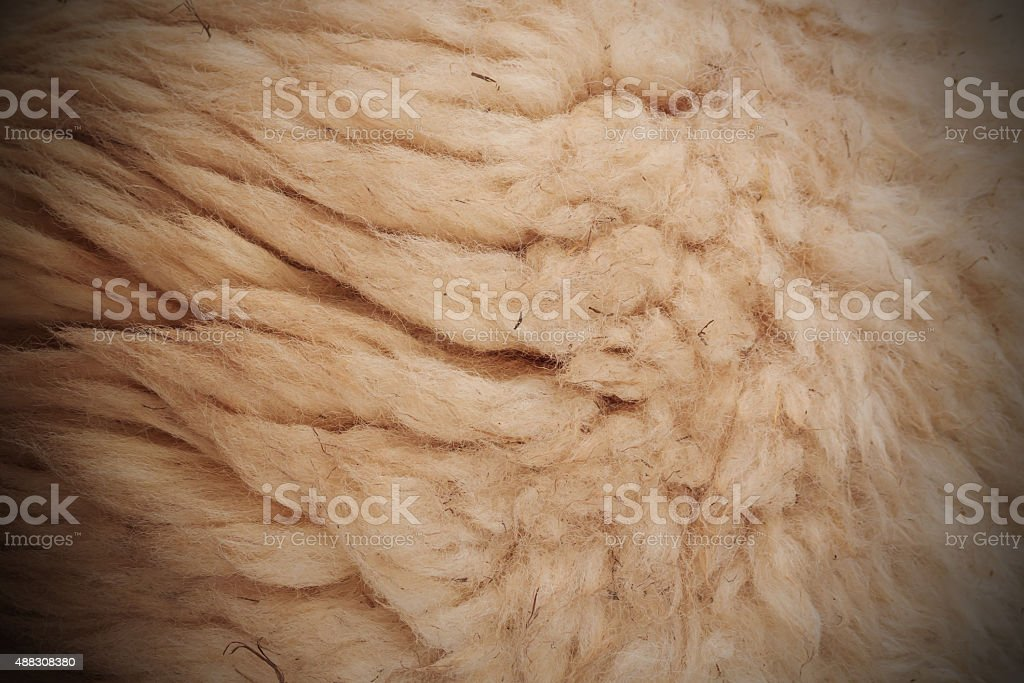 white woolly sheep fleece for background texture stock photo