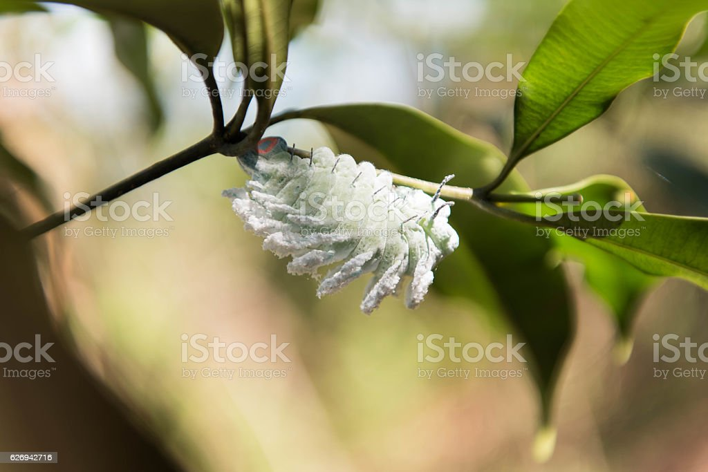 White worm eat leaves stock photo