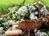 white yarrow in basket