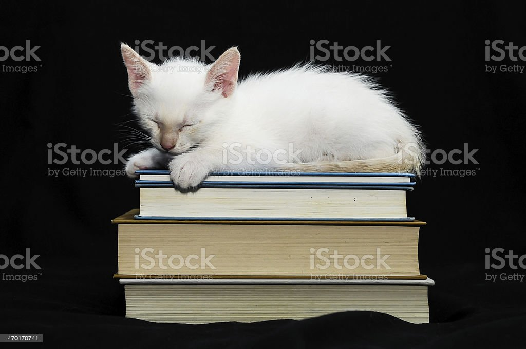 White Young Baby Cat royalty-free stock photo