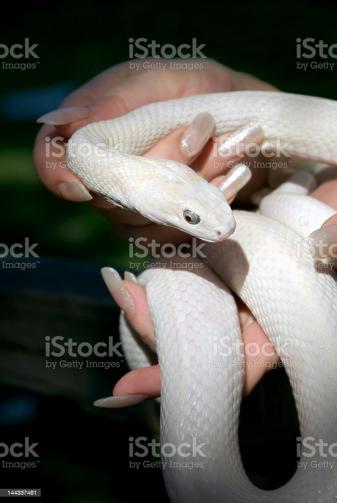 Whiter Shade of Pale stock photo
