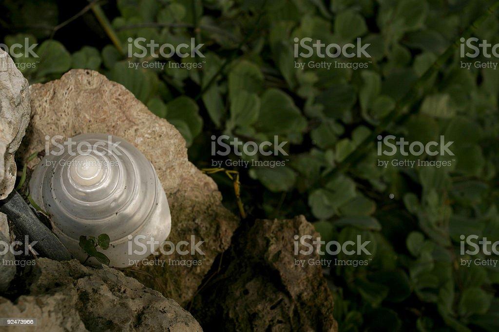 whiteShell stock photo