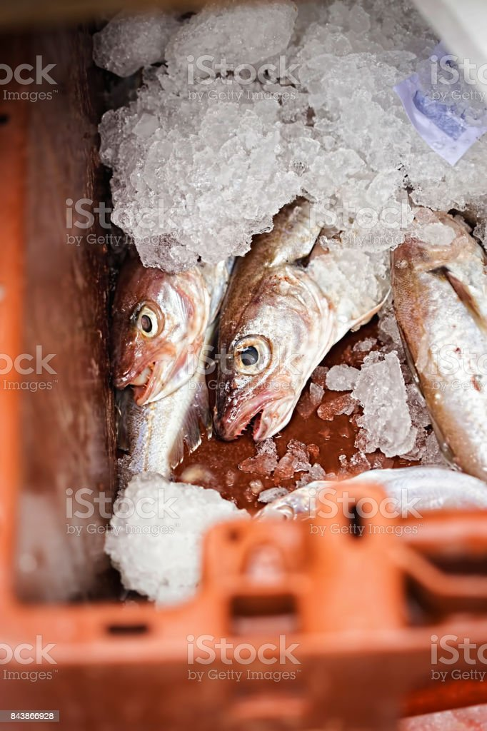 Whiting fish in ice, plastic container, seafood market stock photo
