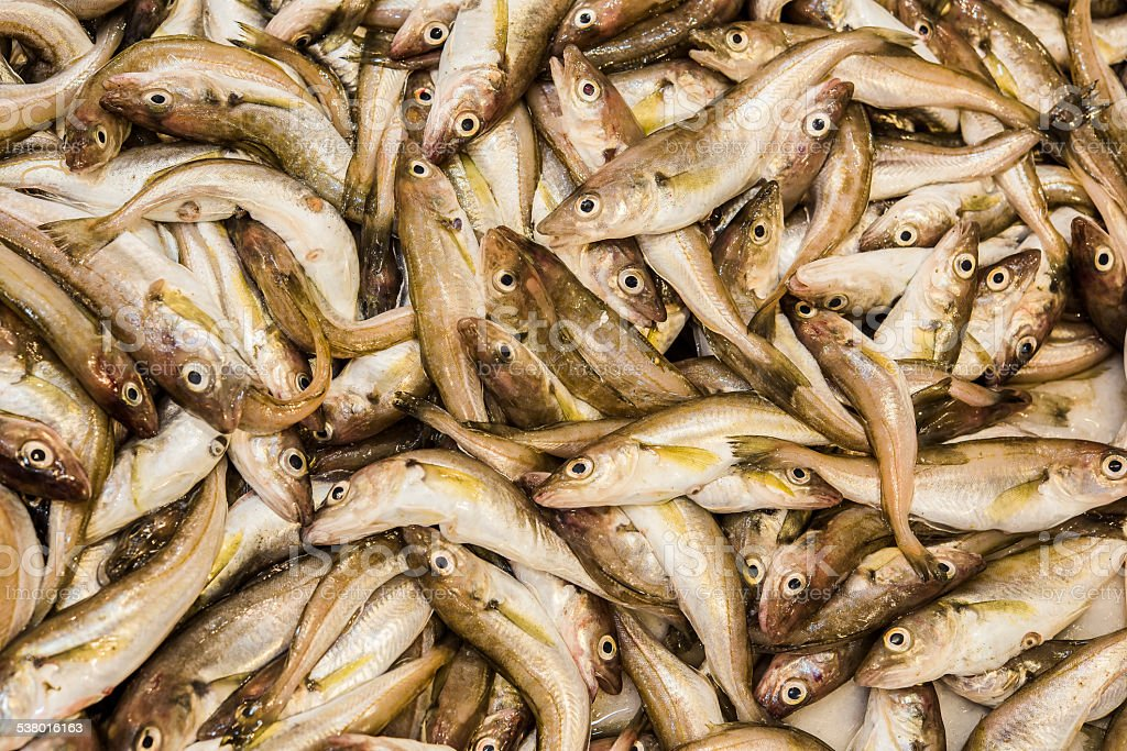 whiting fishes on the fisher table, mezgit stock photo
