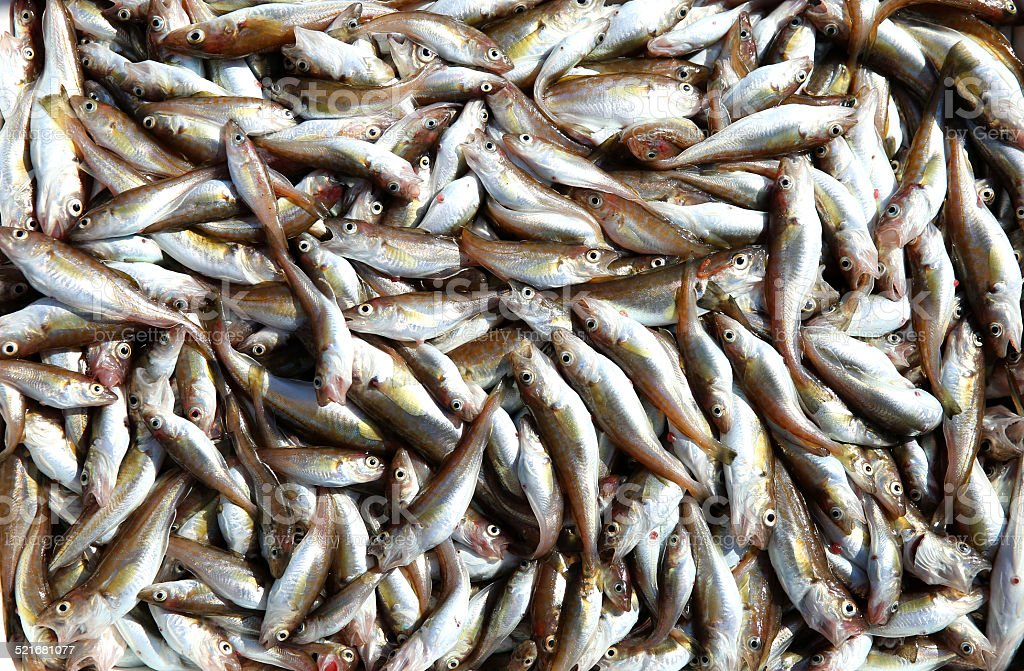whiting stock photo