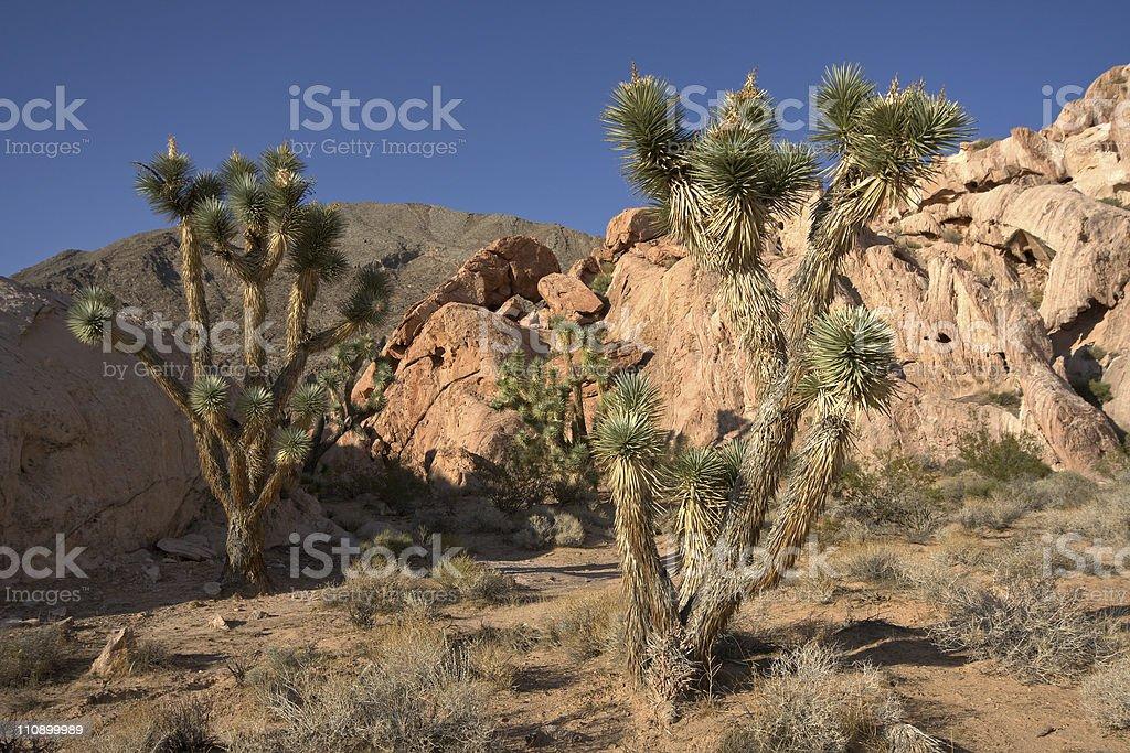 Whitney Pocket, Nevada stock photo