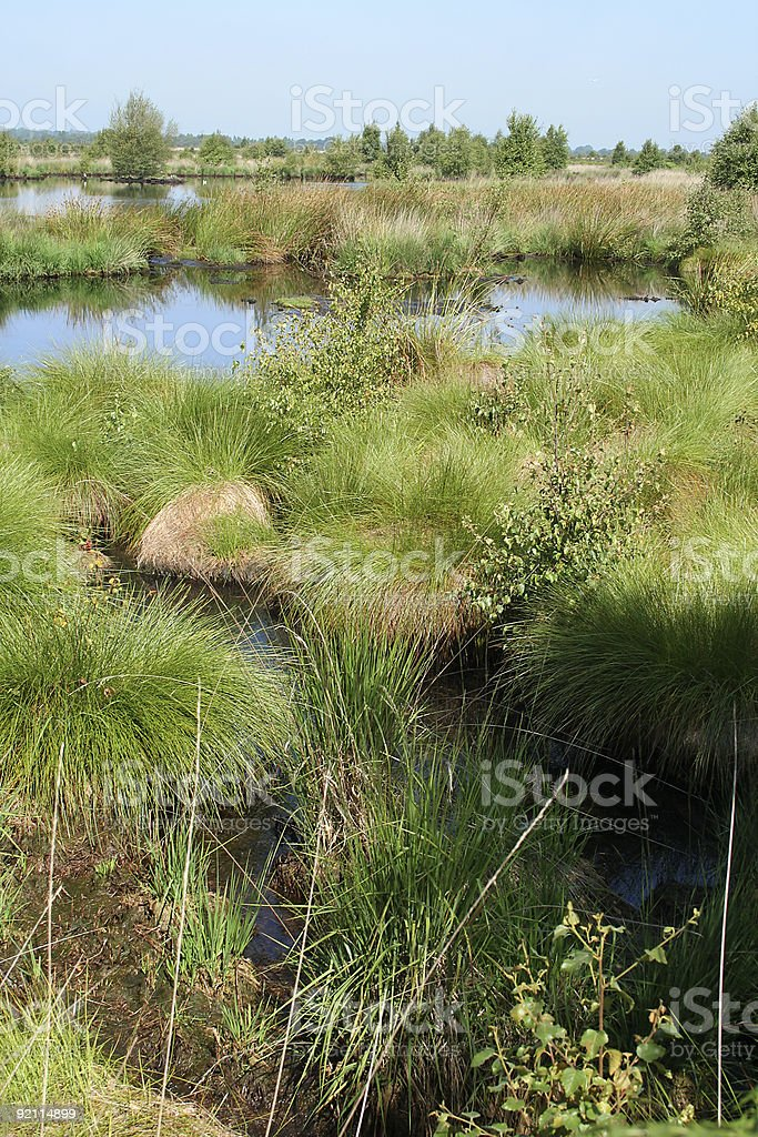 whixall moss stock photo