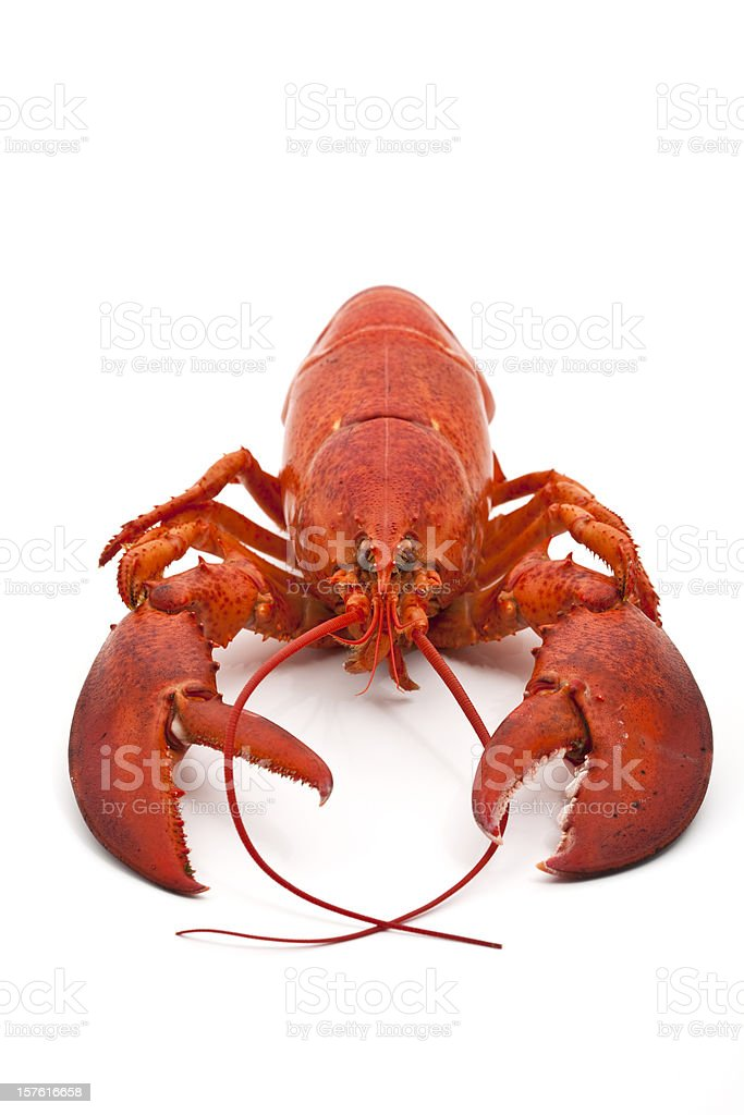 Whole cooked lobster on white background royalty-free stock photo