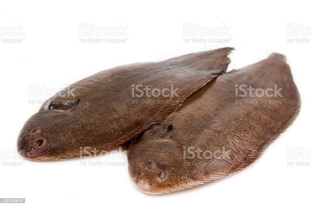 Whole couple fresh sole fish on white background stock photo