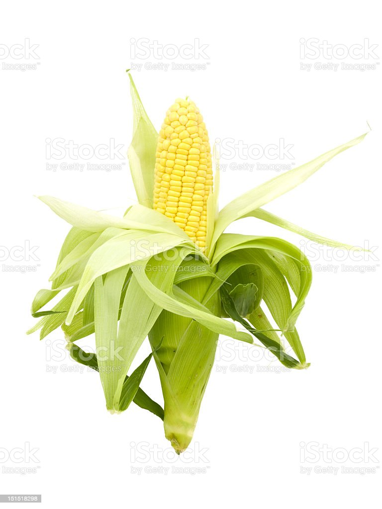 Whole Fresh Corn Cob royalty-free stock photo