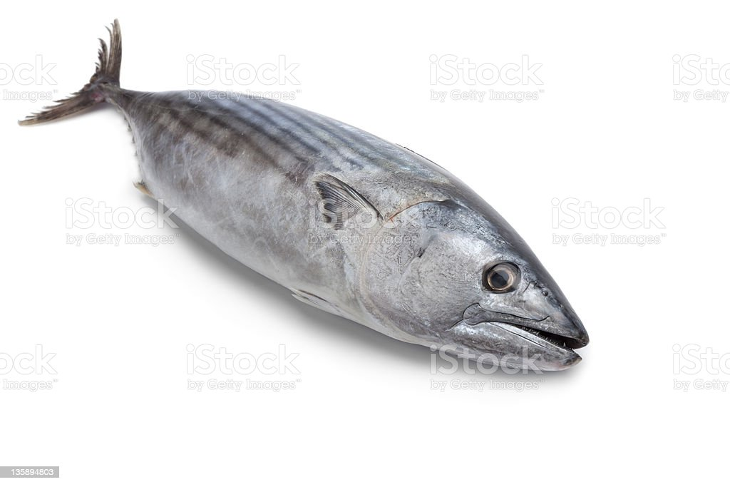 Whole fresh Little tunny, tuna royalty-free stock photo