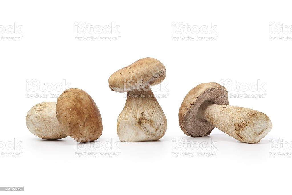 Whole fresh porcini mushrooms royalty-free stock photo